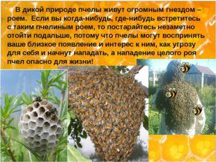 В дикой природе пчелы живут огромным гнездом – роем. Если вы когда-нибудь, г