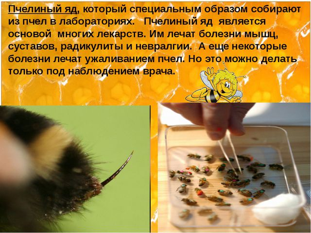 Пчелиный яд, который специальным образом собирают из пчел в лабораториях. Пч...