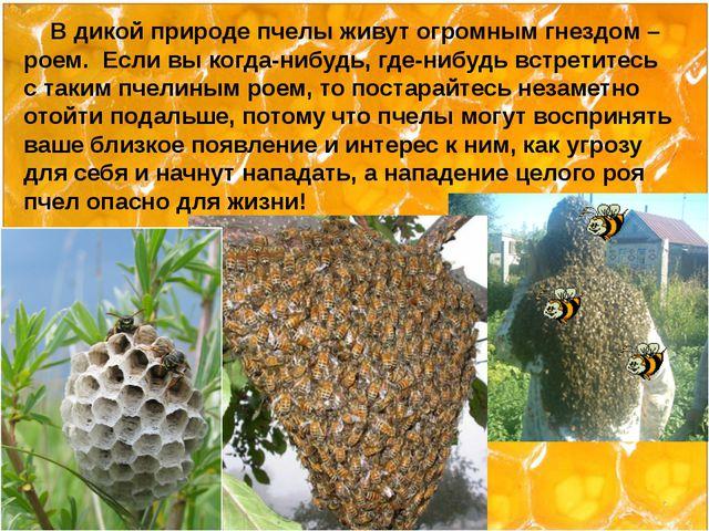 В дикой природе пчелы живут огромным гнездом – роем. Если вы когда-нибудь, г...