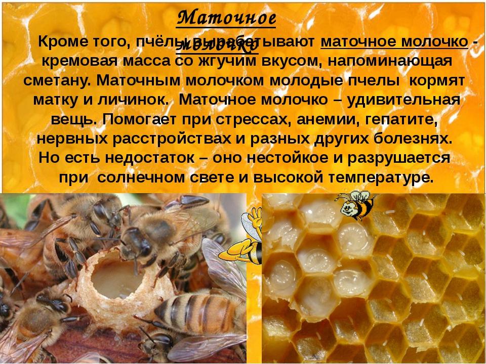Кроме того, пчёлы вырабатывают маточное молочко - кремовая масса со жгучим в...