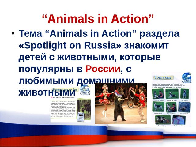 """Animals in Action"" Тема ""Animals in Action"" раздела «Spotlight on Russia» зн..."
