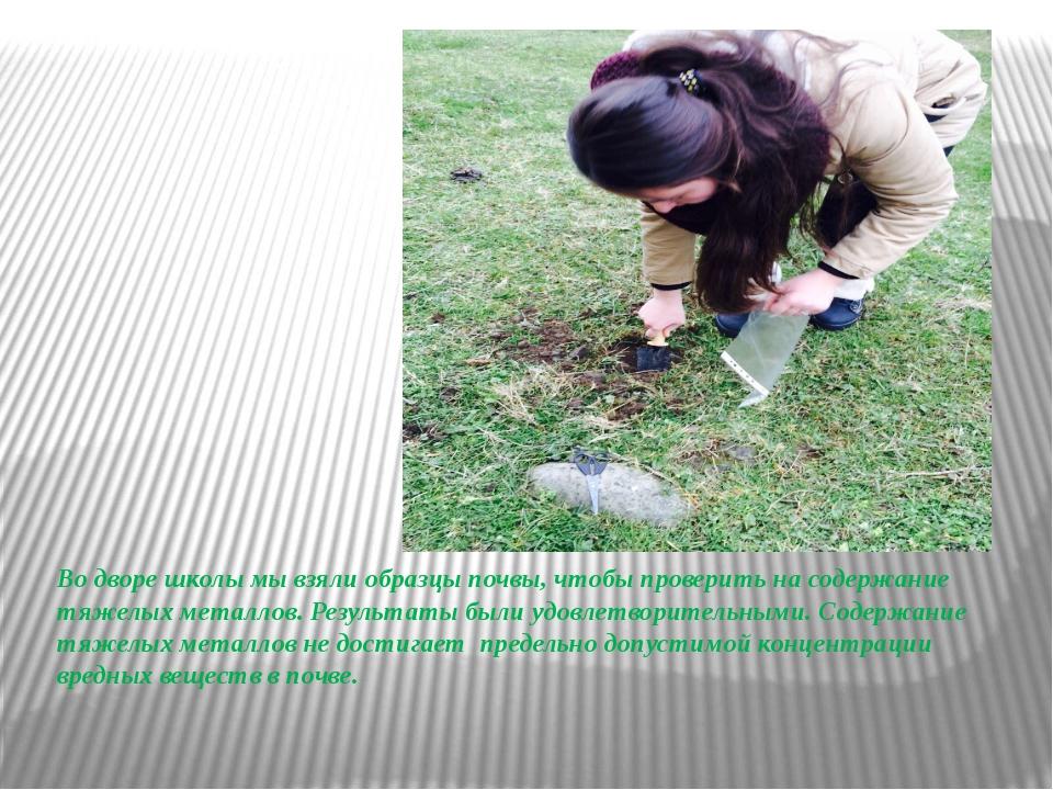Во дворе школы мы взяли образцы почвы, чтобы проверить на содержание тяжелых...