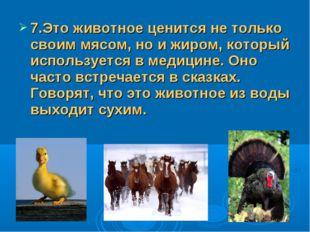 7.Это животное ценится не только своим мясом, но и жиром, который использует