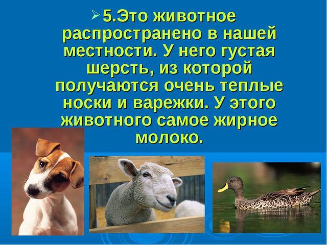 5.Это животное распространено в нашей местности. У него густая шерсть, из ко...