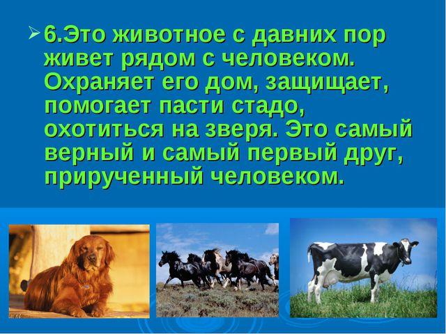 6.Это животное с давних пор живет рядом с человеком. Охраняет его дом, защища...