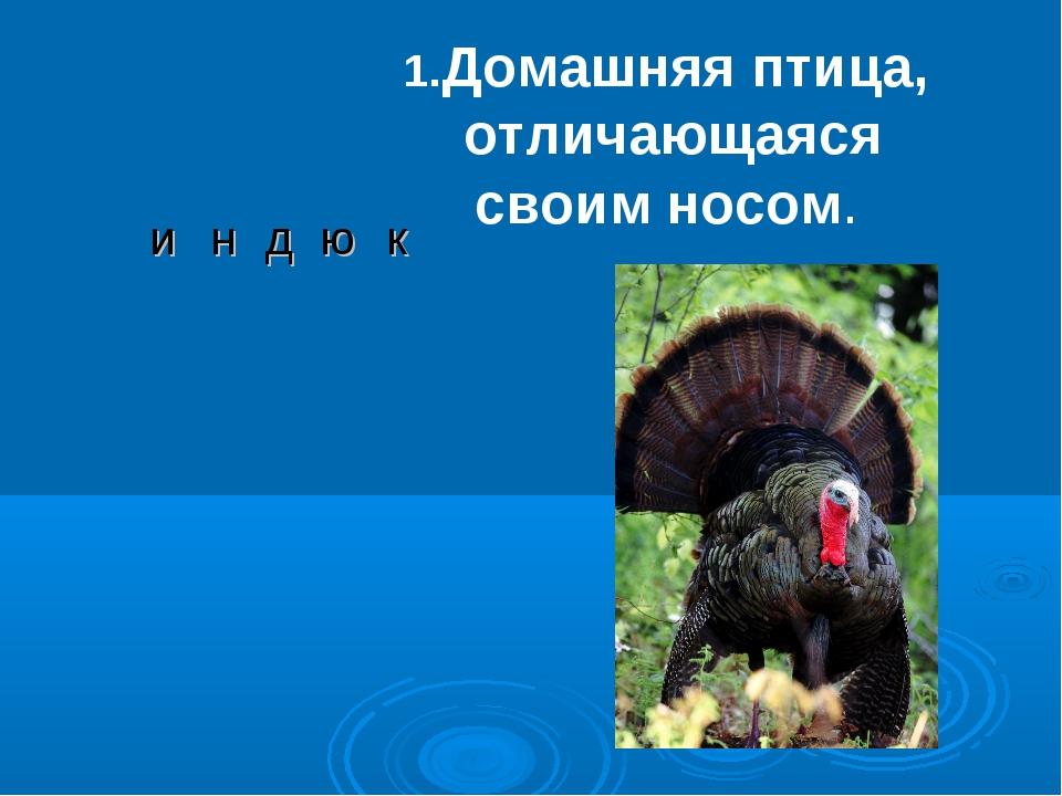 Домашняя птица, отличающаяся своим носом. индюк...