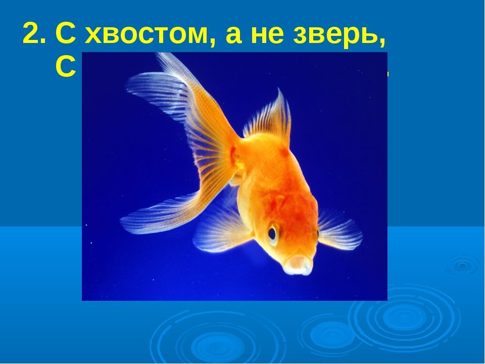 2. С хвостом, а не зверь, С перьями, а не птица.