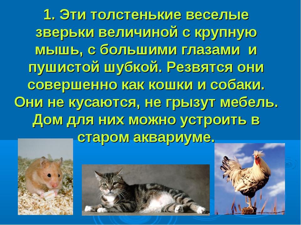 1. Эти толстенькие веселые зверьки величиной с крупную мышь, с большими глаза...