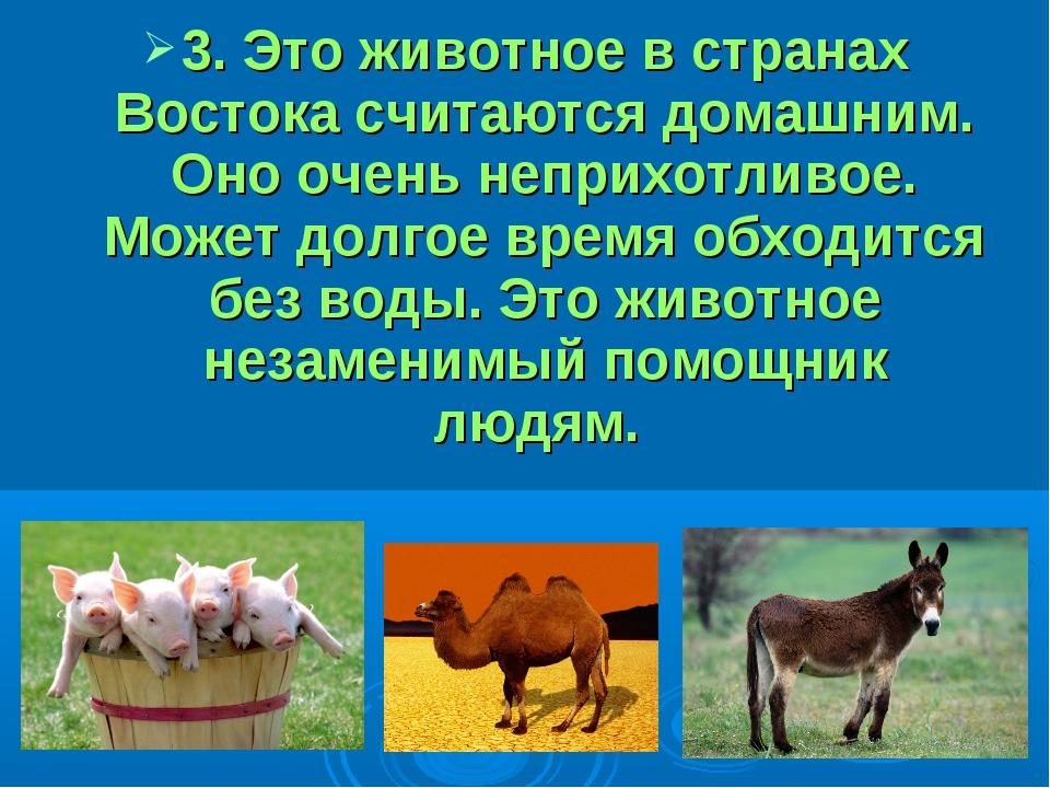 3. Это животное в странах Востока считаются домашним. Оно очень неприхотливо...