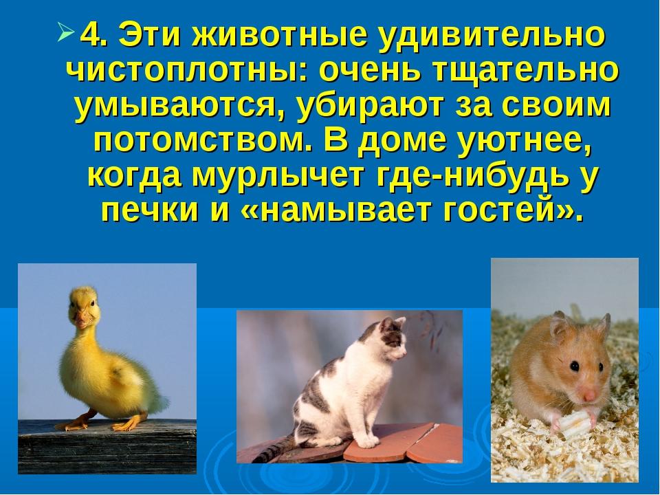 4. Эти животные удивительно чистоплотны: очень тщательно умываются, убирают...