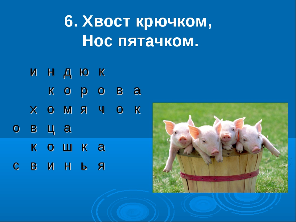 6. Хвост крючком, Нос пятачком. индюк корова хомячок овц...