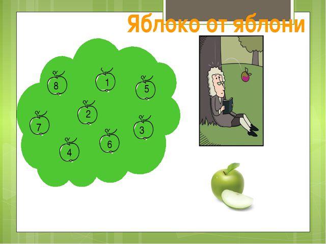 5 8 9 1 2 5 8 7 4 6 3 Яблоко от яблони