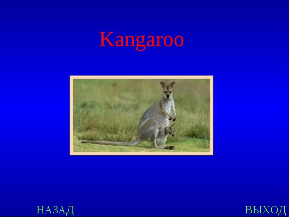 НАЗАД ВЫХОД Kangaroo