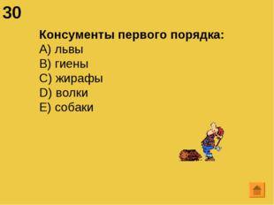 30 Консументы первого порядка: А) львы B) гиены C) жирафы D) волки E) собаки