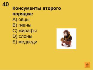 40 Консументы второго порядка: А) овцы B) гиены C) жирафы D) слоны E) медведи