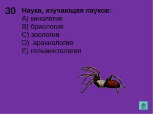 30 Наука, изучающая пауков: А) кинология B) бриология C) зоология D) арахноло