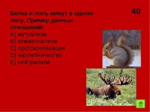40 Белка и лось живут в одном лесу. Пример данных отношений: А) мутуализм B)