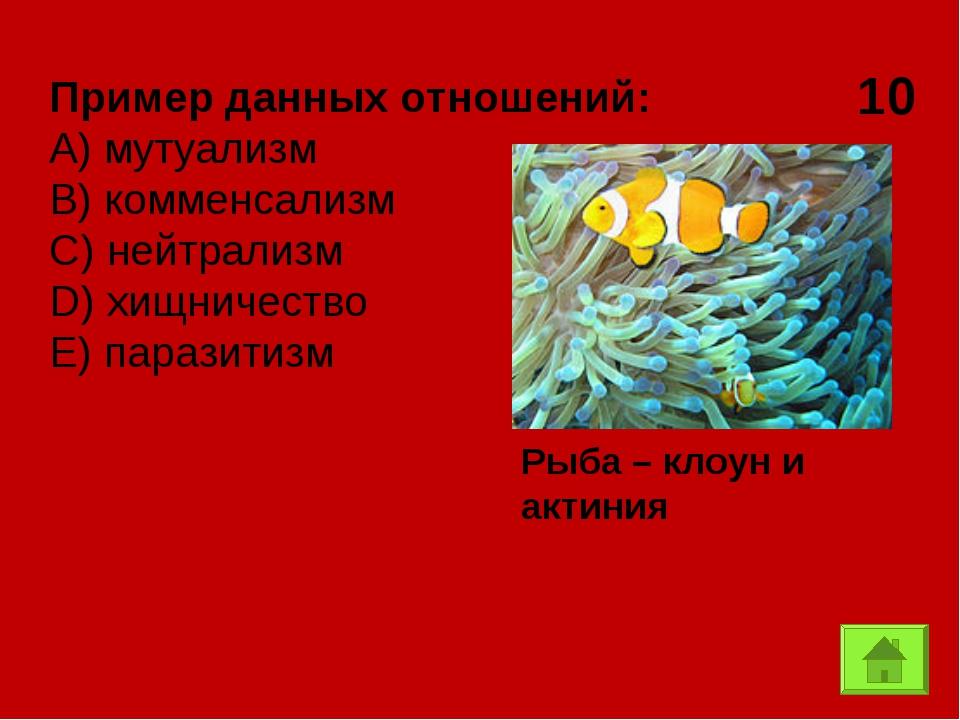 10 Рыба – клоун и актиния Пример данных отношений: А) мутуализм B) комменсали...