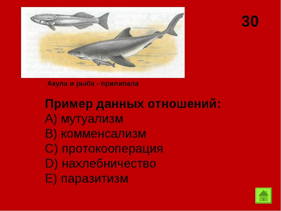 30 Акула и рыба - прилипала Пример данных отношений: А) мутуализм B) комменса...