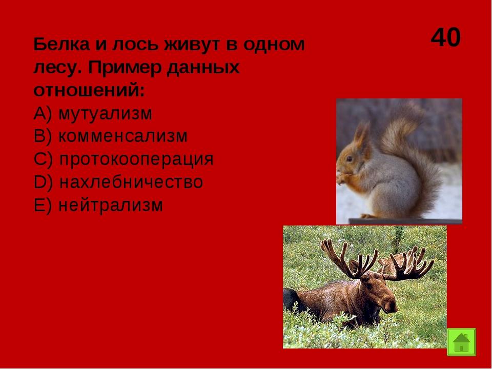 40 Белка и лось живут в одном лесу. Пример данных отношений: А) мутуализм B)...