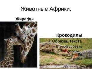 Животные Африки. Жирафы Крокодилы