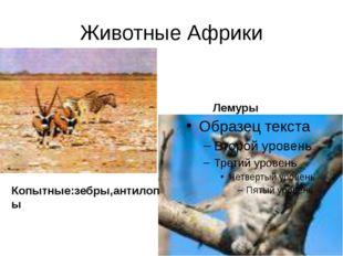 Животные Африки Лемуры Копытные:зебры,антилопы