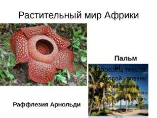 Растительный мир Африки Пальмы Раффлезия Арнольди