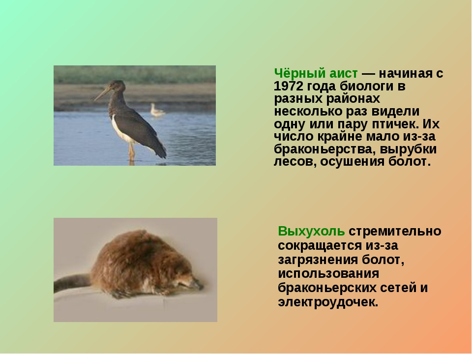 Чёрный аист — начиная с 1972 года биологи в разных районах несколько раз виде...