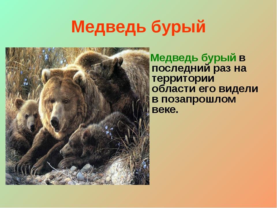 Медведь бурый Медведь бурый в последний раз на территории области его видели...