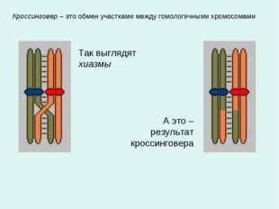 Кроссинговер – это обмен участками между гомологичными хромосомами Так выгляд