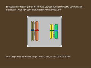 В профазе первого деления мейоза удвоенные хромосомы собираются по парам. Это