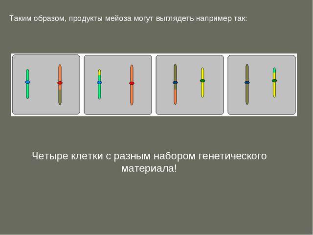 Таким образом, продукты мейоза могут выглядеть например так: Четыре клетки с...