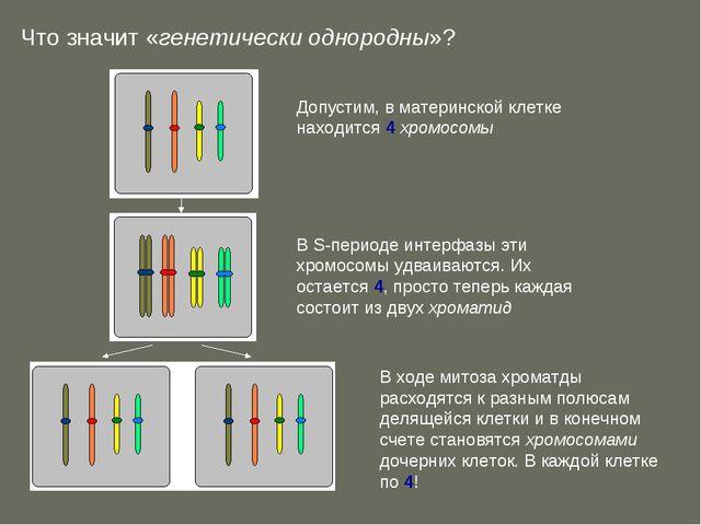 Что значит «генетически однородны»?