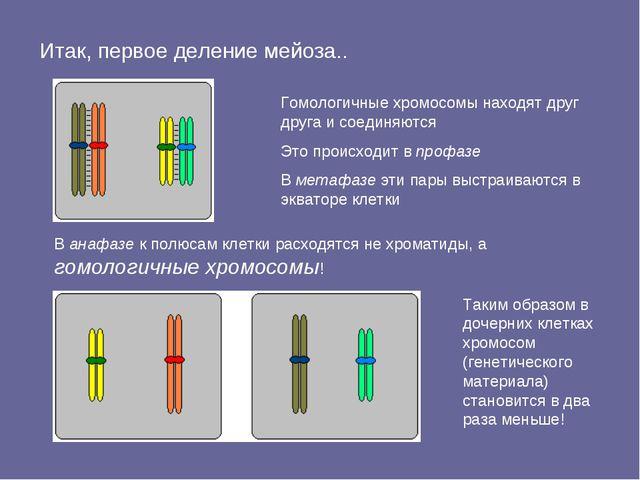 Итак, первое деление мейоза.. В анафазе к полюсам клетки расходятся не хромат...