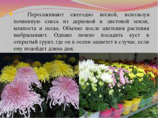 Пересаживают ежегодно весной, используя почвенную смесь из дерновой и листов