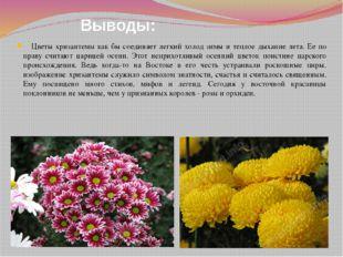 Выводы: Цветы хризантемы как бы соединяет легкий холод зимы и теплое дыхание
