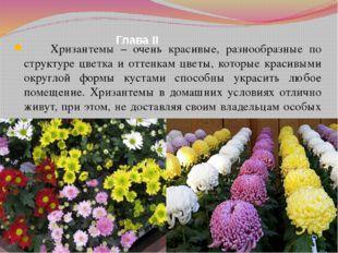 Глава II Хризантемы – очень красивые, разнообразные по структуре цветка и отт