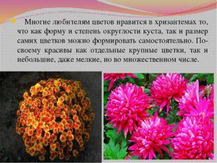 Многие любителям цветов нравится в хризантемах то, что как форму и степень о