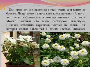 Как правило, эти растения ничем очень серьезным не болеют. Чаще всего их пор
