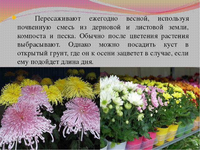 Пересаживают ежегодно весной, используя почвенную смесь из дерновой и листов...