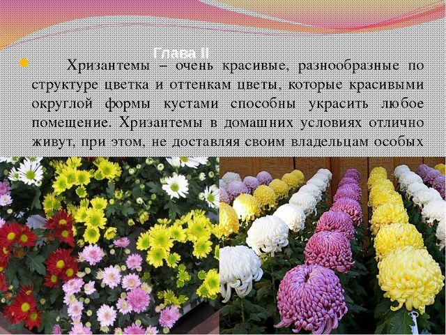 Глава II Хризантемы – очень красивые, разнообразные по структуре цветка и отт...