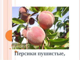 Персики пушистые,