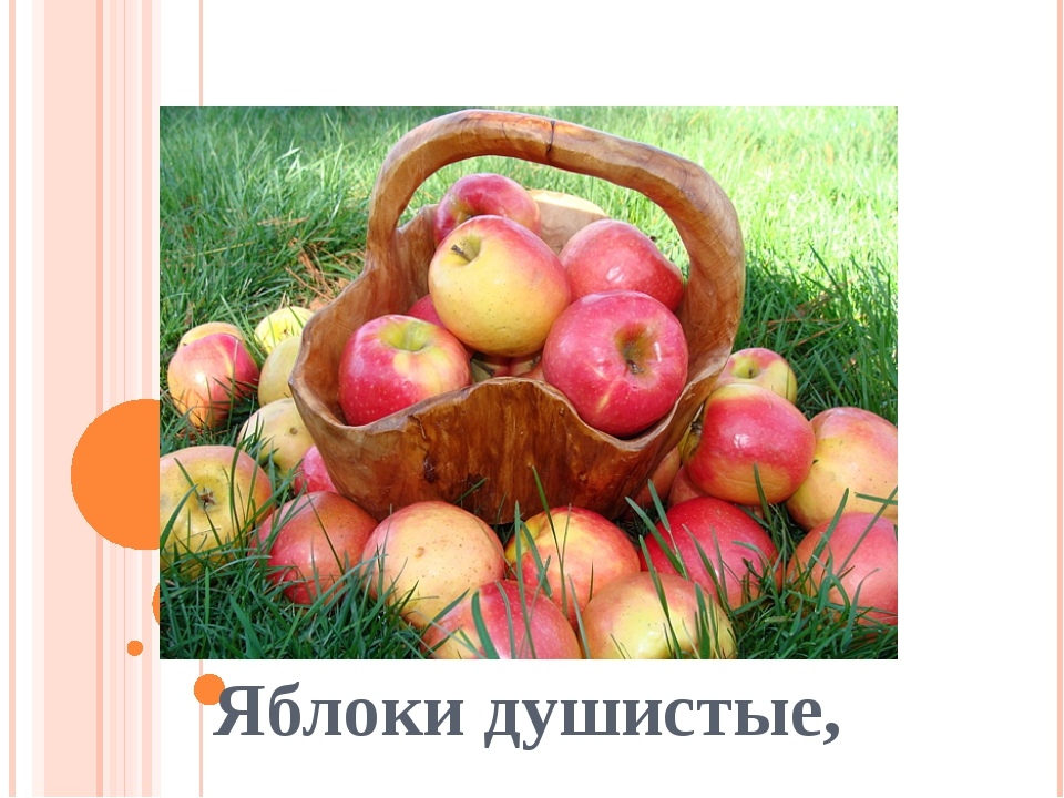 Яблоки душистые,