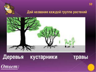 Деревья, кустарники, травы 50 Ответ: лимон Разгадай ребус, узнай название дер