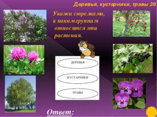 растения 10 На какие две группы можно разделить эти растения Ответ: лиственн