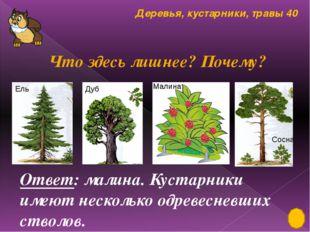 Лиственные, хвойные растения 30 Обозначь простые листья - , сложные листья -