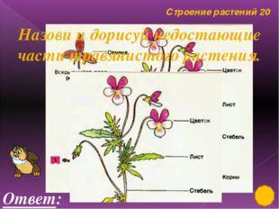 Строение растений 10 Ответ: Назови и подпиши части дерева.