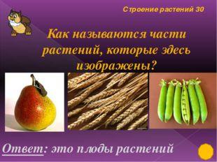 Строение растений 20 Ответ: Назови и дорисуй недостающие части травянистого р