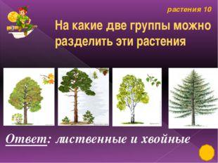 Строение растений 50 Ответ: берёза Чем уникально это растение?