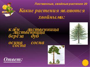 Культурные растения 10 Где выращиваются эти плоды? Распредели на группы. Отве